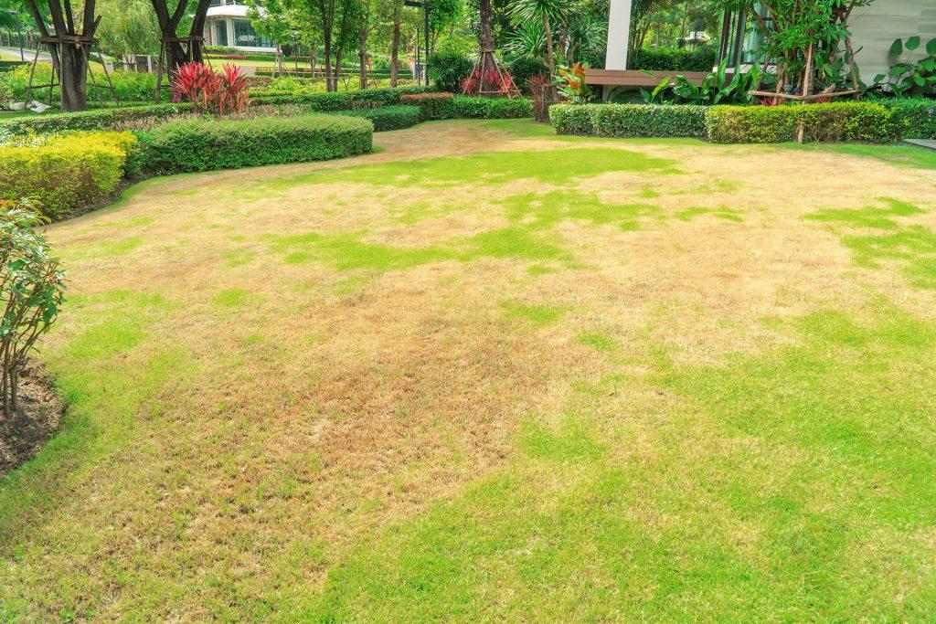Een dorre tuin, hetgeen we willen voorkomen door in de zomer de tuin te beregenen.